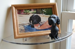 Inner Clear Shelf dog picture frame
